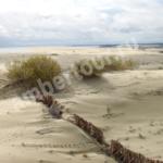 дюны на Куршской косе фото