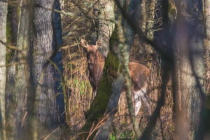 танцующий лес фото