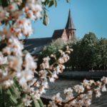 весна в калининграде фото